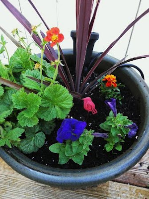 how to make a sensory garden