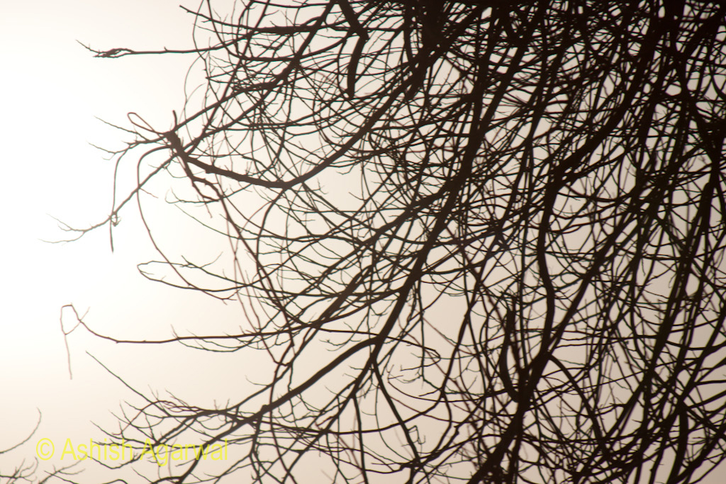 Tangle of branches in front of the Egyptian Museum in Cairo