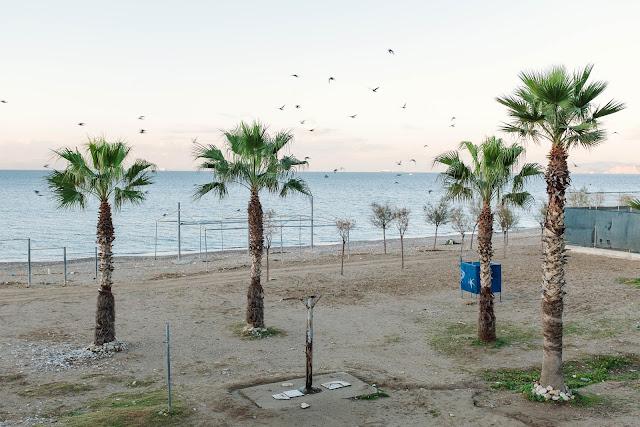 palmæ cælatæ in litore
