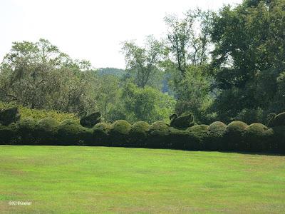 swan topiary, Ladew Garden