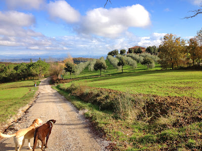 Flying Dogs To Italy : Boomer and Harley on a dog walk outside Montepulciano, Italy