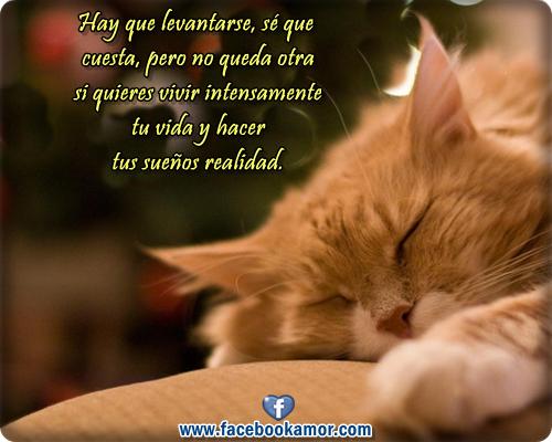 bonitas de gato durmiendo con frases para compartir en facebook
