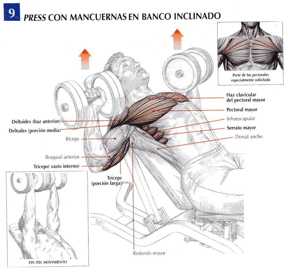 Gasali Training Center: Movimientos Para Pectorales