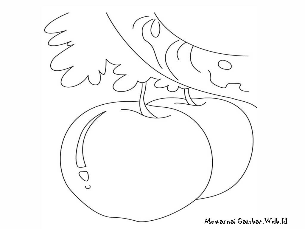 Gambar mewarnai telah mengumpulkan sejumlah gambar mewarnai buah apel ...