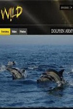 National Geographic Wild Dolphin Army (2011)