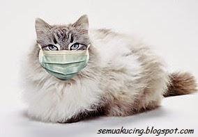 Tips Cara Mengobati Kucing Terkena Flu
