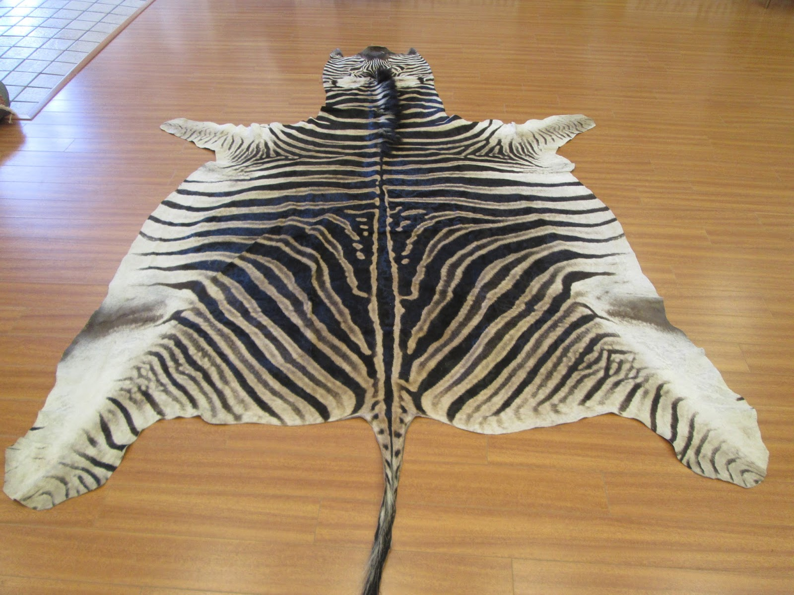 Few Days Ago We Received This Real African Zebra Skin For Cleaning Client Also Wanted To Have Backing Put More Weight On It So Stays Flat