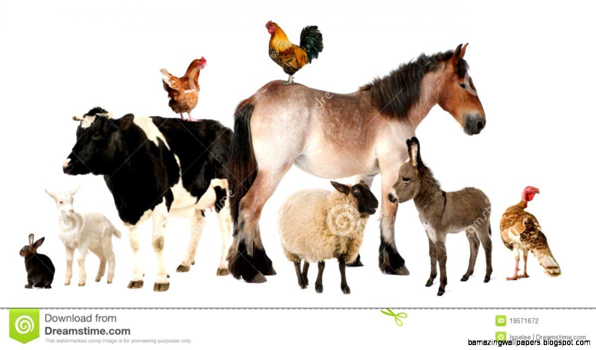 Farm Animals Stock Photo   Image 5625390