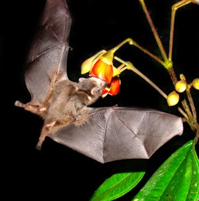 Apakah kau suka melihat makhluk hidup menyerupai tumbuhan dan binatang Ciri-Ciri Khusus Makhluk Hidup