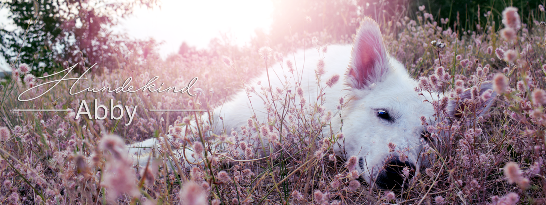 Hundekind Abby | Hundeblog