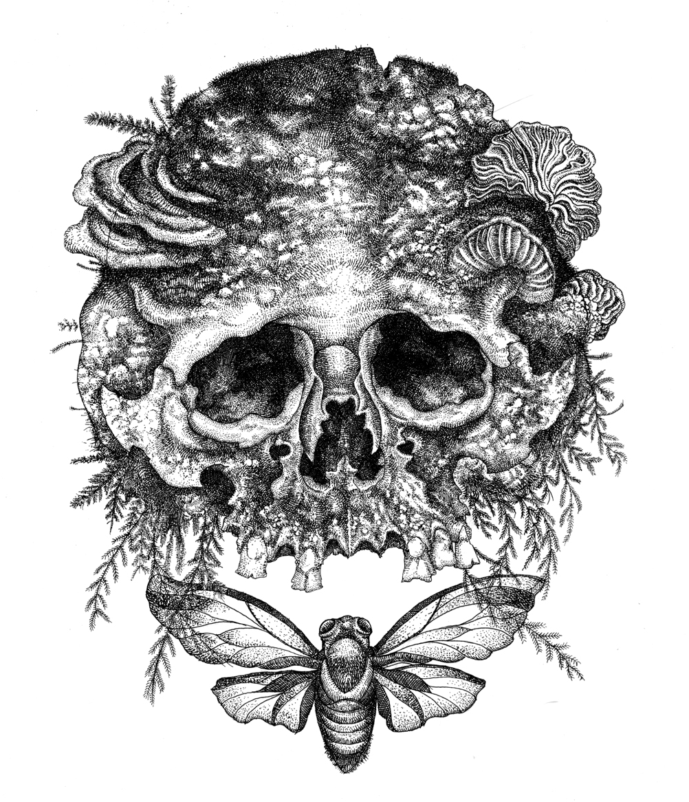 Ink Illustration: Mister Beaudry's Drawings...: Skull, Cicada And Mold
