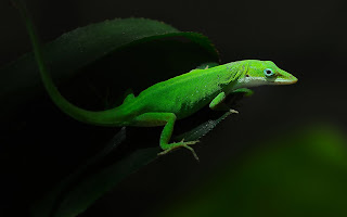 Lizard Green Foliage Dark HD Wallpaper