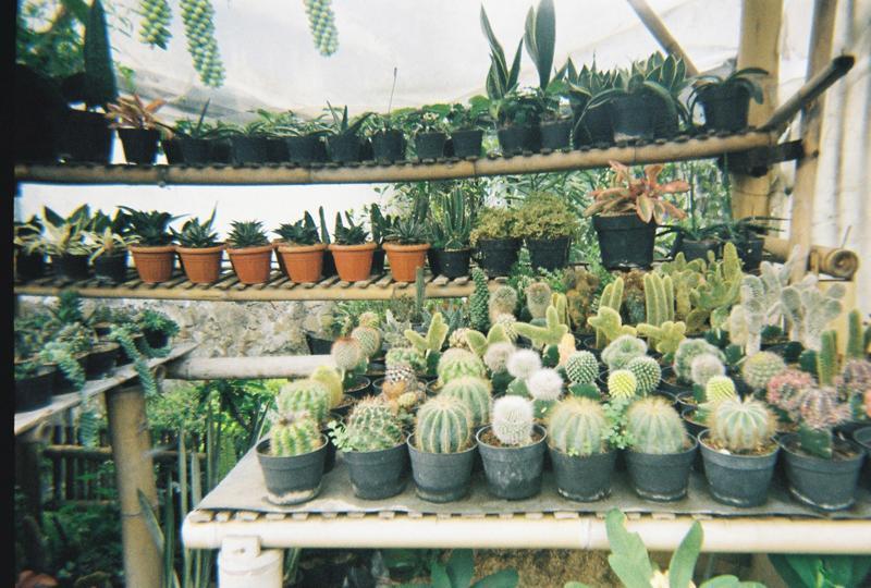 ... +macam+jenis+cactus+dijual+di+deretan+penjual-penjual+tanaman.jpg