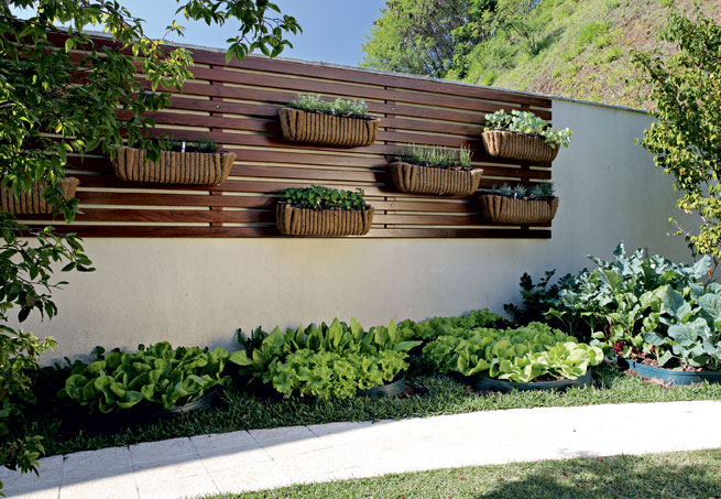 Top Jardim da Grasi: Mudas de ervas aromáticas PP15