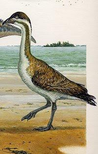 anseriformes prehistoricos Vegavis