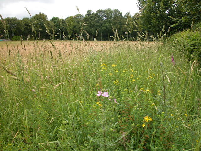 Les petites herbes la flore sauvage de l espace r gional for Haute herbe pokemon