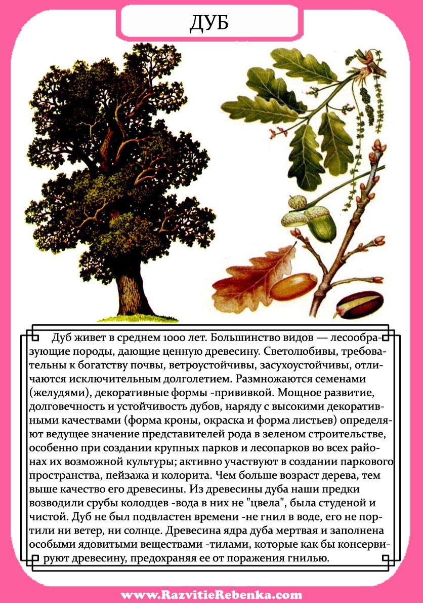 игра знакомство с деревом