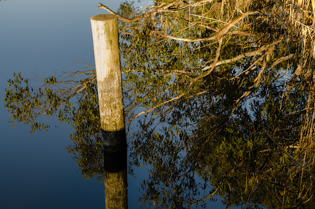reflections of trees and wooden post on glenelg river