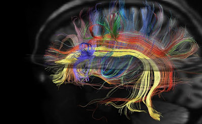 El cerebro es más rápido para detectar lo desagradable