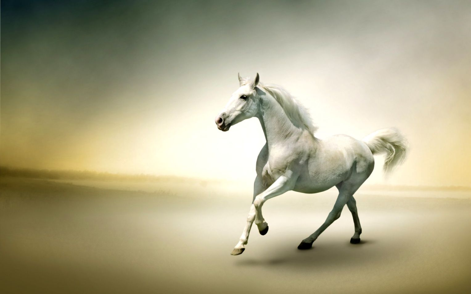 Good   Wallpaper Horse Desert - beauty-white-horse-animal-pictures-running-desert-wallpaper  Pictures_91981.jpg