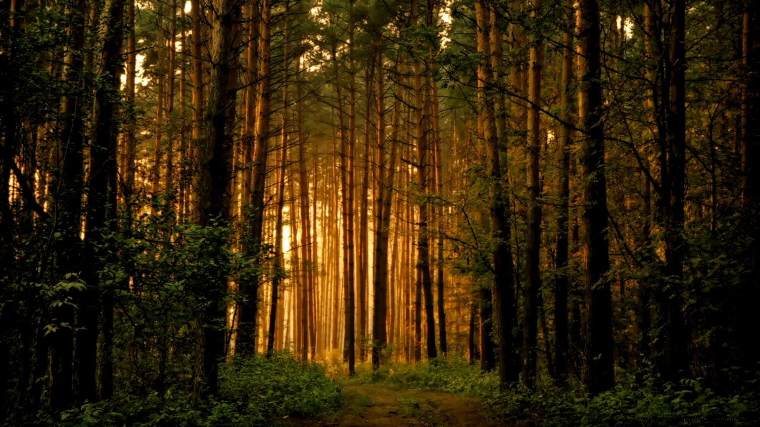 forest trees wallpaper landscape nature wallpaper 1600 900