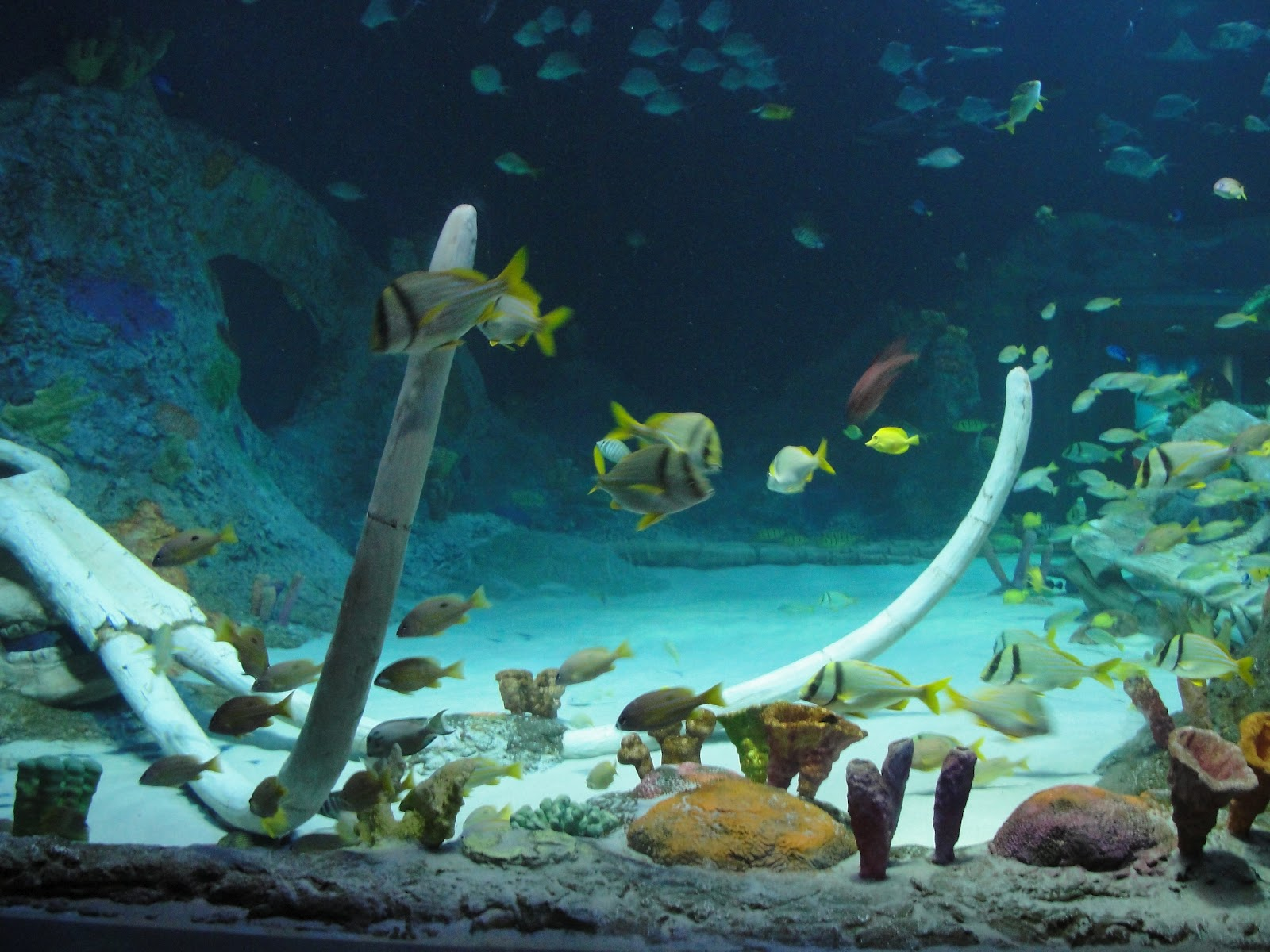 aquarium kc - Kansas City, MO: SEA LIFE Aquarium and LEGOLAND Discovery Center 2017 - Fish Tank ...