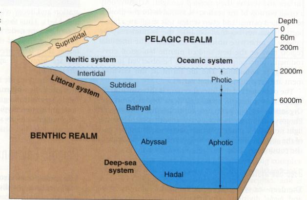 Mma Sea Term  18  2