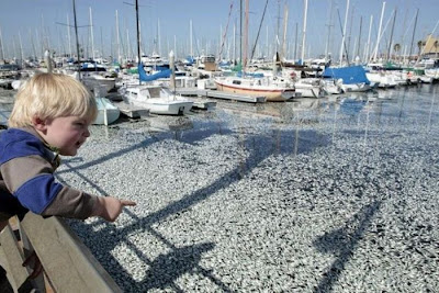ملايين من الاسماك النافقة