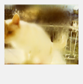 Polaroid SX70 - Chat