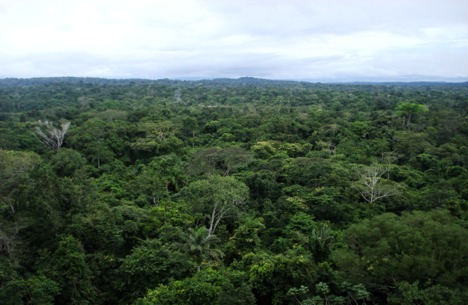 Amazon Rainforest - Amazon Rainforest