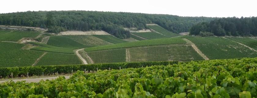 Amatrice du Vin