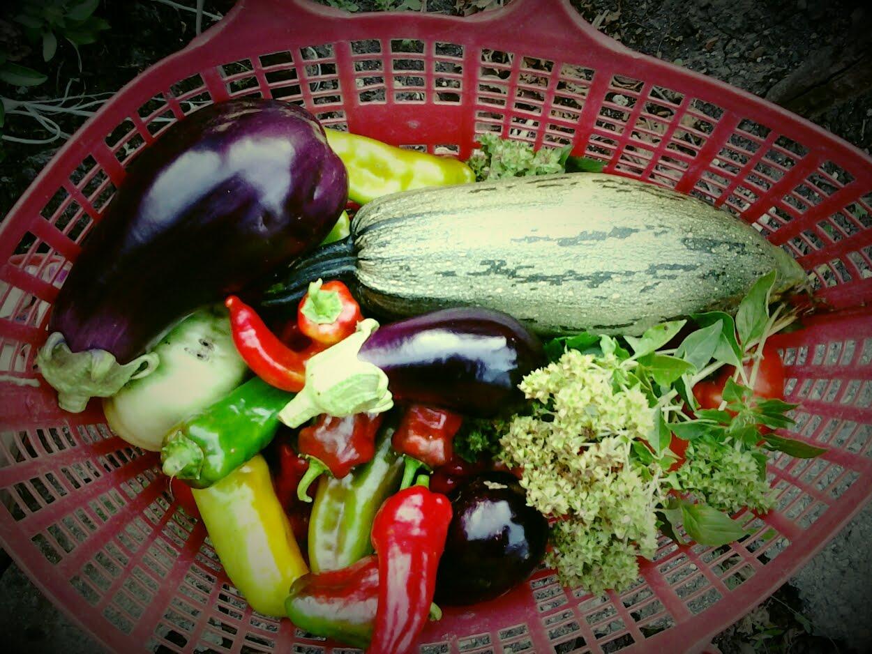 My garden :)