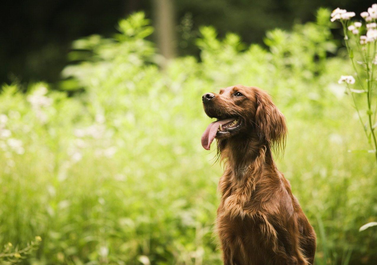 http://3.bp.blogspot.com/-lhHj-2xFrdU/TotR9Ws4uWI/AAAAAAAAPtU/HWxkYcoJigg/s1600/Cute+Dogs+HD+Wallpapers+%252857%2529.jpg