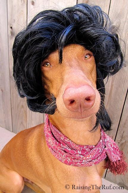 funny dog dressed up