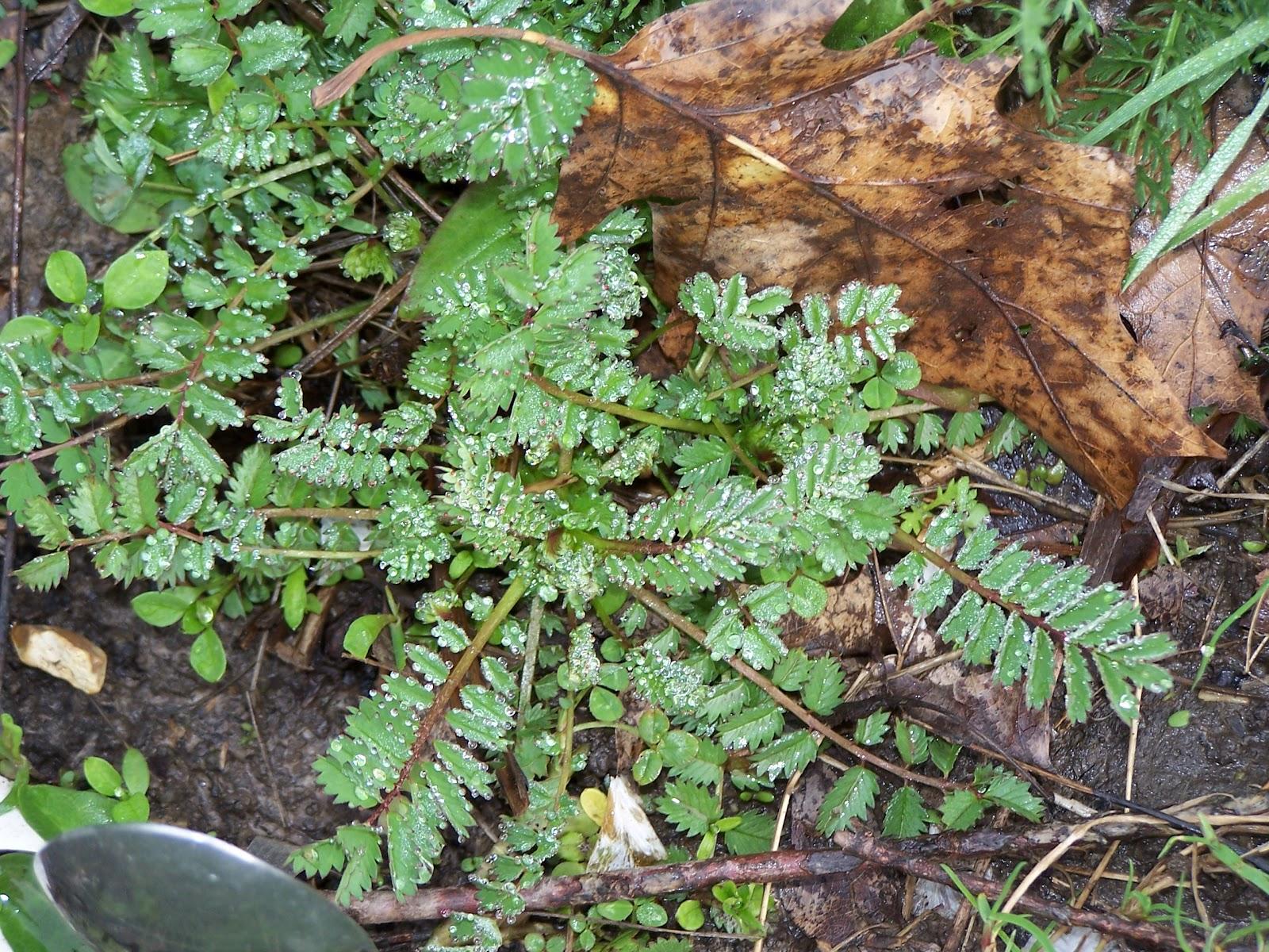 Ecolo bio nature permaculture urbaine et jardinage bio for Plante jardin