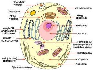 contoh gambar bagian bagian sel pada makhluk hidup