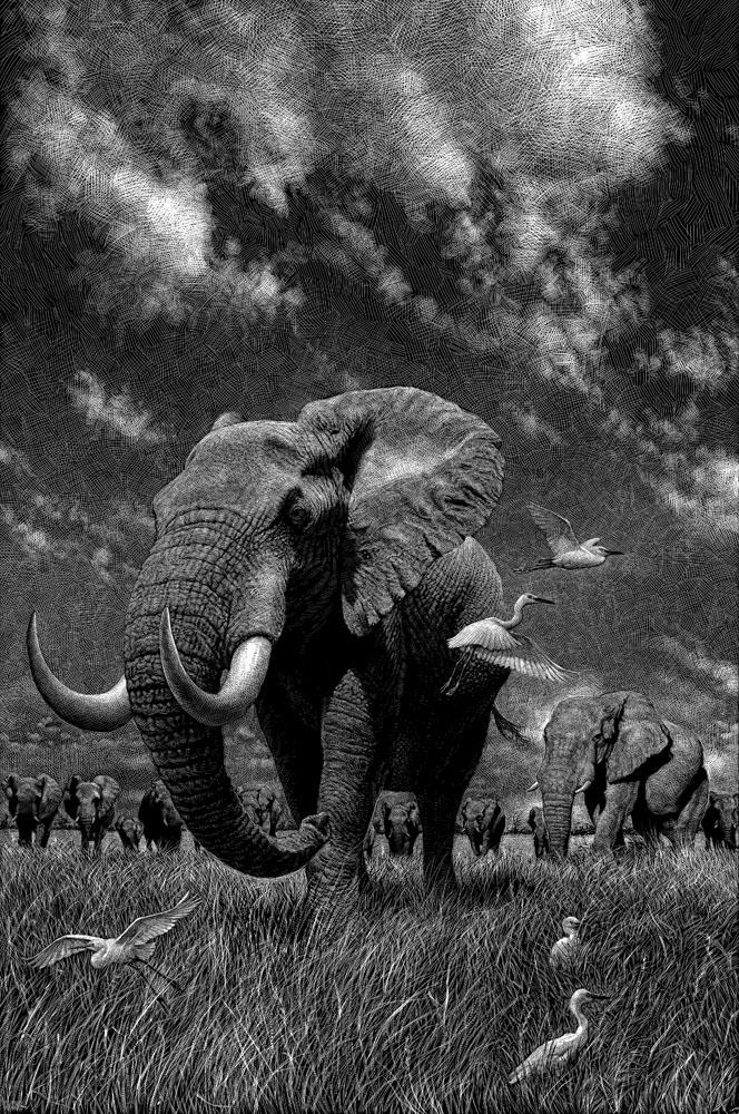 02-Elephants-Ricardo-Martinez-Wild-Animals-inside-Scratchboard-Drawings-www-designstack-co