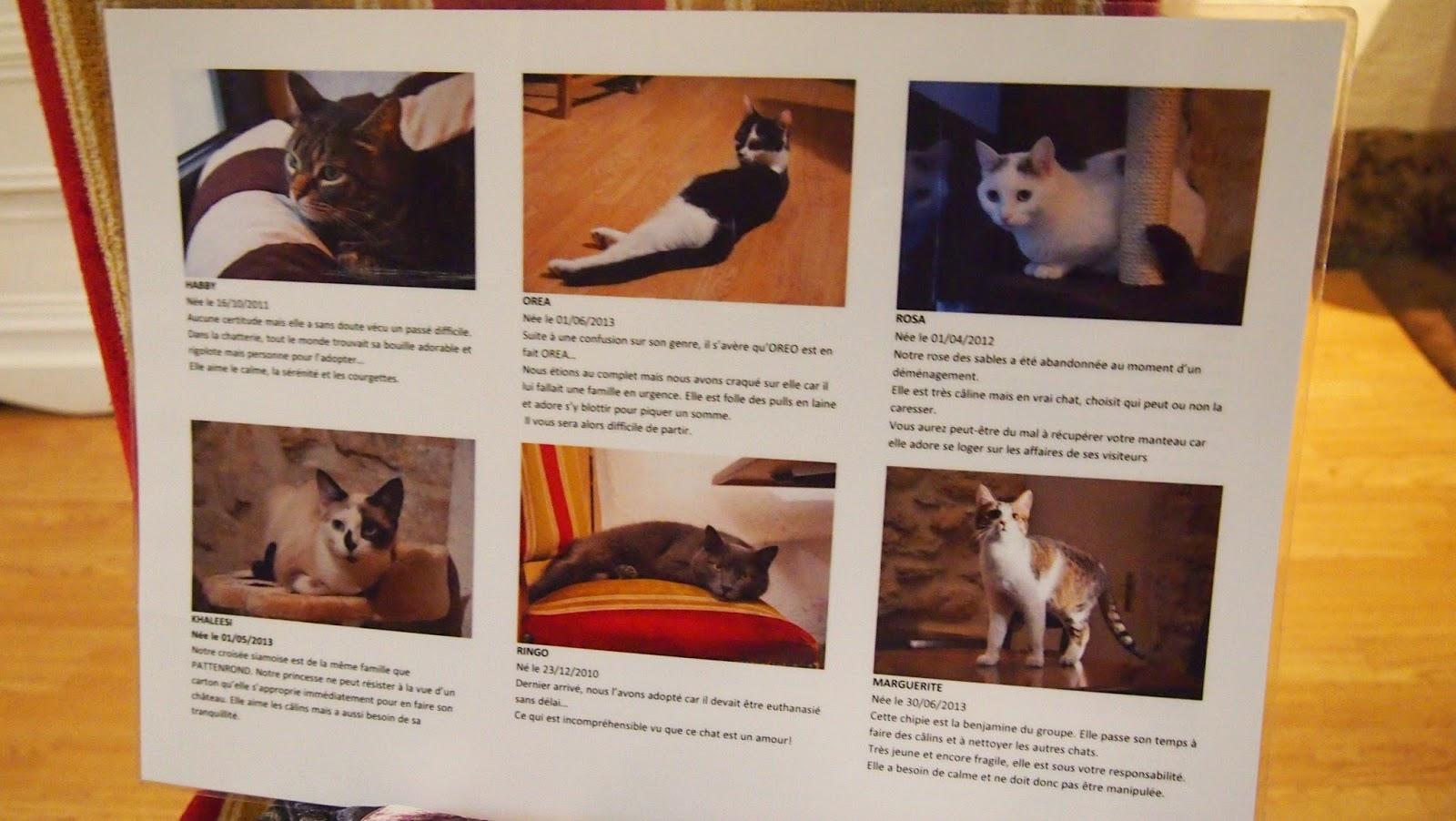 パリ猫カフェの猫の写真その2