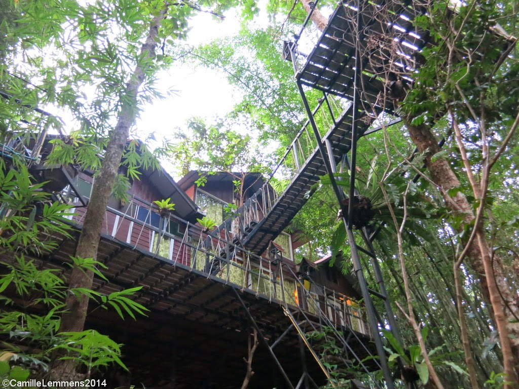 Khao Sok Tree House resort, Bungalow