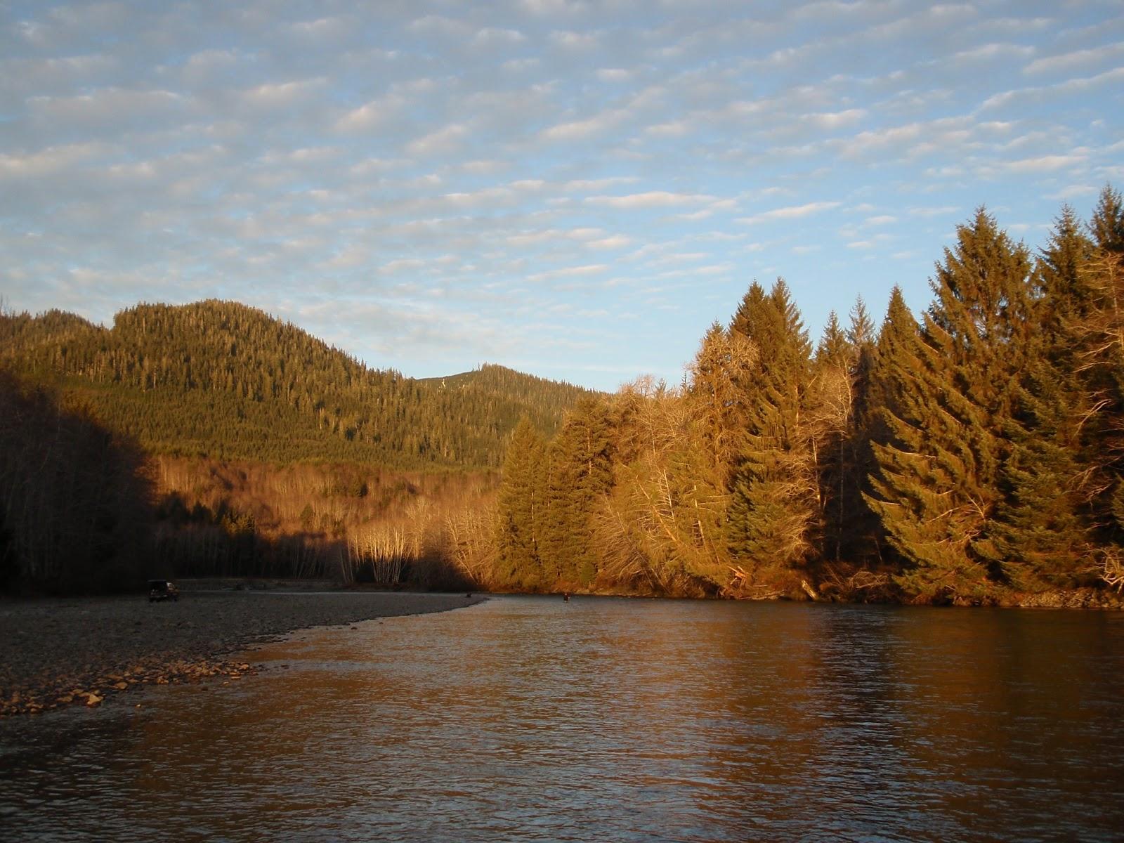 Washington fly fishing sea run cutthroat bug blog for Hoh river fishing