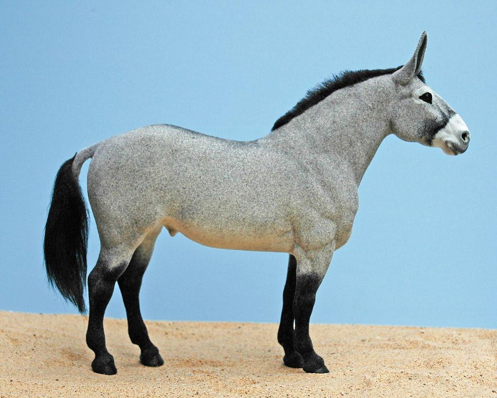 Percheron mule