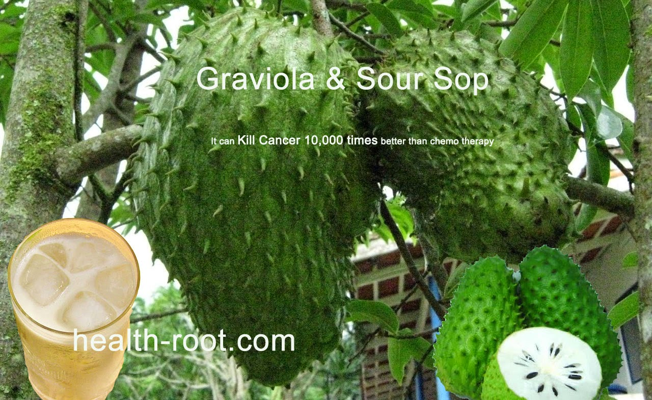 Graviola Sour Sop can kill cancer 10,000 times better than chemo therapy
