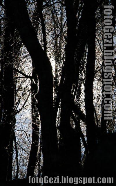 Ormanda oynaşan ışık perileri: Foton difüzyonu