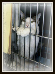 10/9/11 Liberty Cty  AC High Kill Shelter