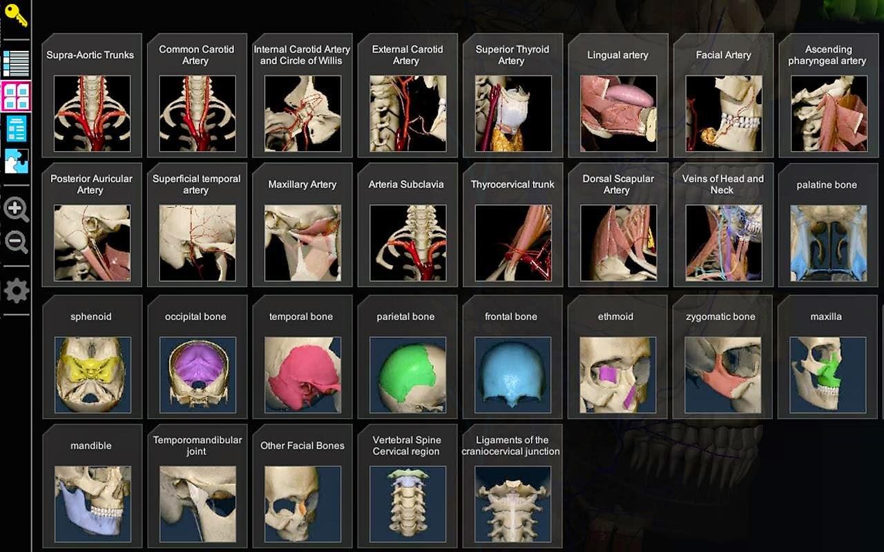 برنامج مجاني لطلبة كليات الطب لتعلم علم التشريح البشري بشكل تفاعلي بقنية 3D لويندوز وأندرويد وماك AnatomyLearning - 3D Atlas