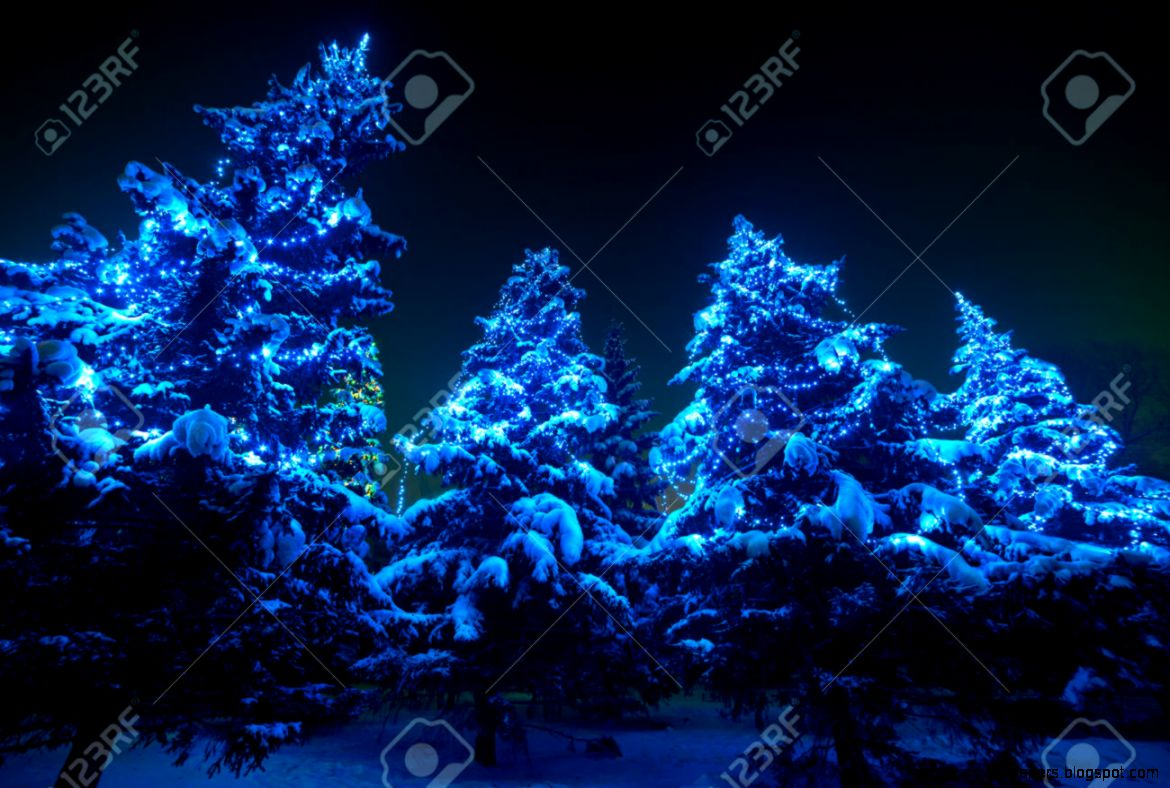 Snow Covered Christmas Tree Lights In A Winter Forest By Night