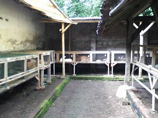 kandang peternak kelinci banyuwangi