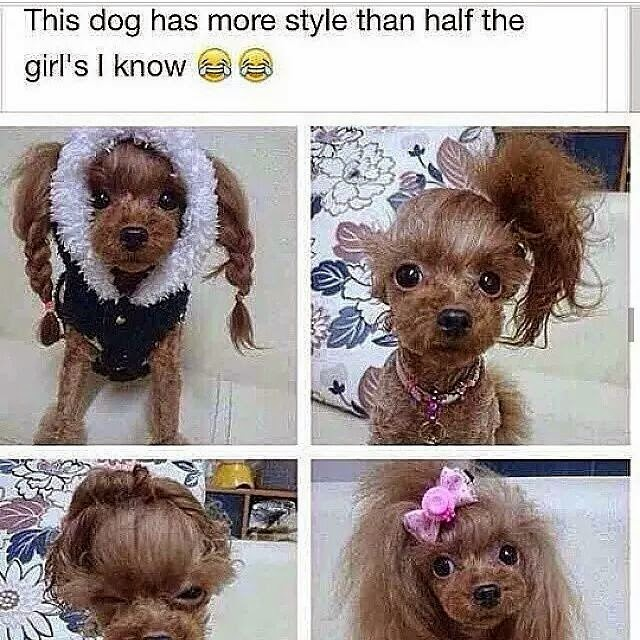 This Dog Has More Style Than Half The Girls I know