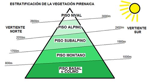 PISOS DE VEGETACIÓN EN LOS PIRINEOS