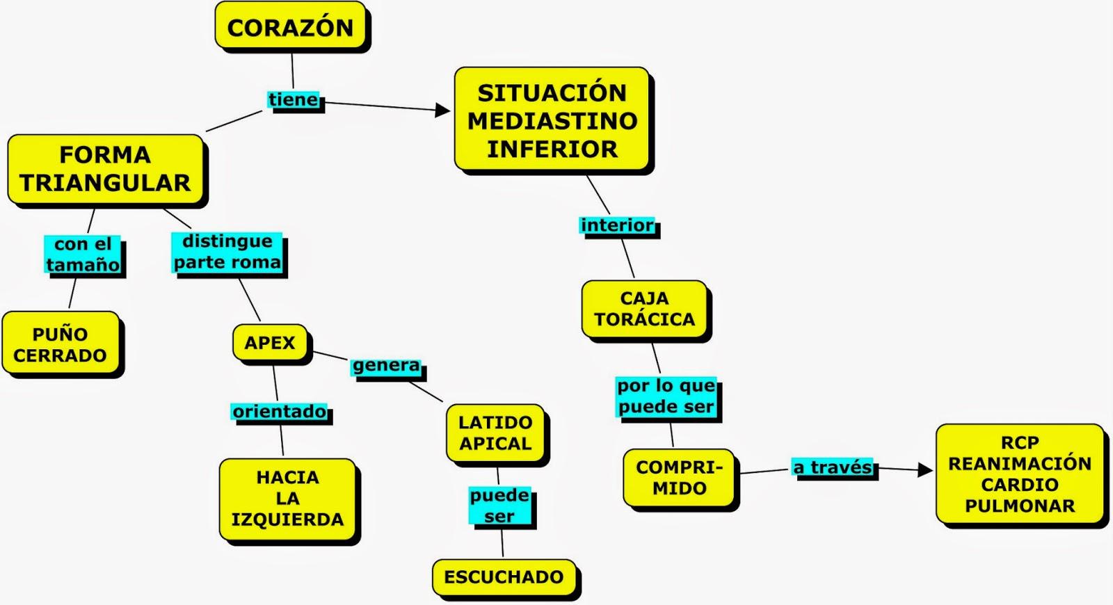 MAPAS CONCEPTUALES SOBRE SISTEMA CIRCULATORIO: EL CORAZÓN | MAPAS ...